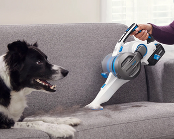 Dog on couch with handheld vac